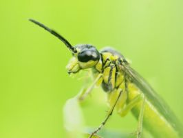 Yellow bug by GertuSaariste