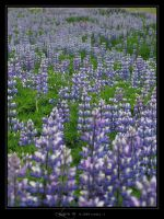 Lupin IV by Crooty