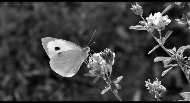 Butterfly fly. by askmeaboutnothing
