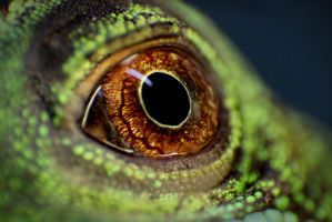Eye of my dragon by 16Andie16