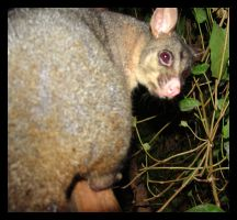 peek a boo by yepyepyep