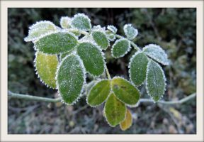 Under the morning frost (4) by Hubert11