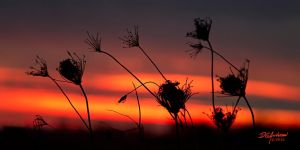 Nov-02-weeds-sunset by DGAnder