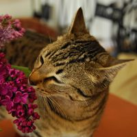 cats like lilac III by Wilithin