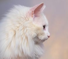 Cat Profile by brenbren