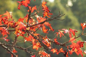 fall time orange by root-for-theUNDERDOG