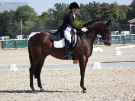National Dressage and Jumping_18 by CalyHoney