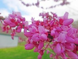 Flowers on a Branch 02 by SnapShot120