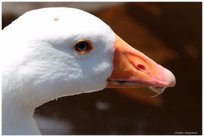 little big gosling the white by Claudia008