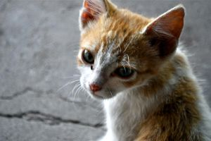 Sad Cat Eyes by Sergio-Saenz