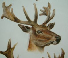 red deer by lindseydearnley