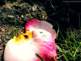 Flower Pedals by musicismylife2010