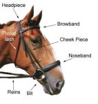 English bridle diagram by Equine-Help