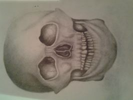 skull pencil drawing by chloeleggett46