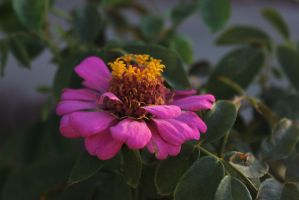Flower 8 by Thepieholephotograph