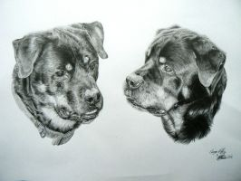 George and Harry the Rotties - Commission by Fullmetal-puppy