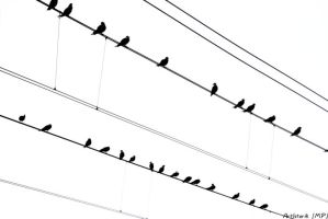 Birds on-line by ArtIsterik