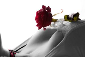 Red Rose by Santian69