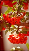 red by wildtea