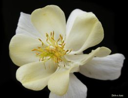 Columbine 386 by Deb-e-ann