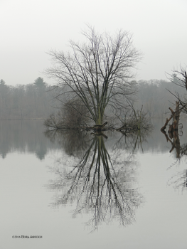 Reflecting on a grey day by Mogrianne