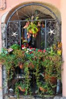 Window garden - Vernazza by wildplaces
