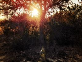 Sunset Tree by TheGerm84