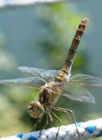 Dragonfly, again by Yudet
