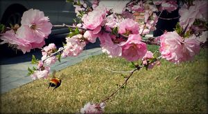 Flight of the bumble bee by GoneChopin