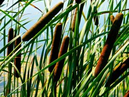 Cat Tails 1 by TropicalxLondon