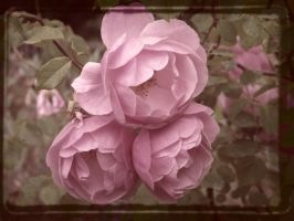 Vintage Roses by Neneplayswithpaper