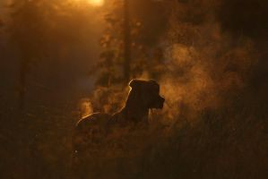 steaming dog (no processing) by nbd12