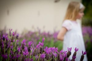 Fields of Lavender by Colin-LOCP