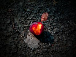 THE ROTTING FRUIT OF LOVE by ANDYBURGESS