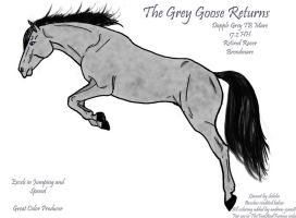 The Grey Goose Returns by Thunderbolt-Designs