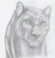 Panther by punxnotdead309