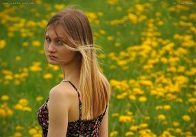 Candy in the dandelion field by Val-Mont