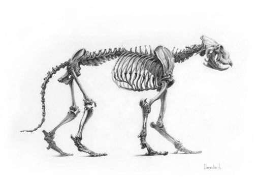 Skeleton Of The Lion 2 by CalciteMink1610