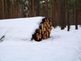 wood pile by xxtasiaxx