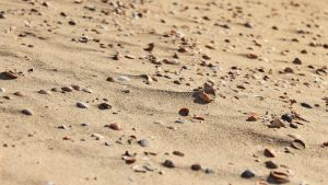 Clam Beach FullHD by metabolid