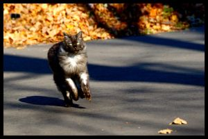 Run Kitty Run by ThroughHerEyez