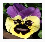 Crazy Pansy by plumita1