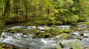 Forest and river Orbe 2 by ALP-Stock