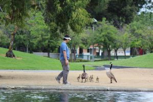 Greeting the Geese by AtomicBrownie