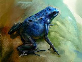 Study: Poison Dart Frog by LindseyWArt