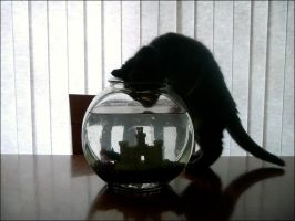 Cat and The Fishbowl pt. Two by serrarose