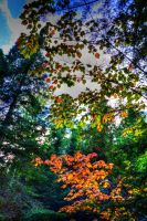 Leaves by simpspin