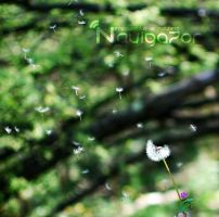 dandelion by NaViGa7or
