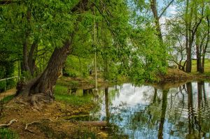 Pond Scenery Stock by mindym306