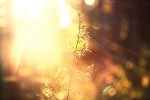 Oh, the bokeh by kristineheart